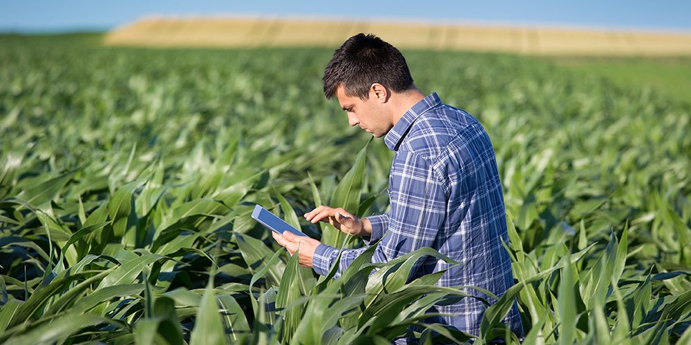 Online Tools for Corn Growers