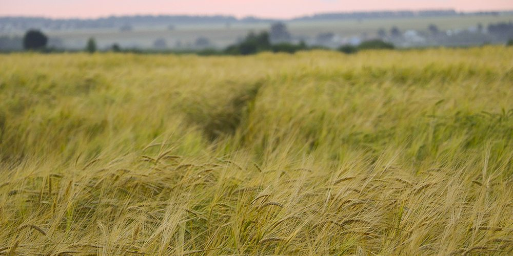 Top Cover Crops